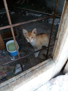 Living in very poor conditions.  Looking forward to getting them to their new home.